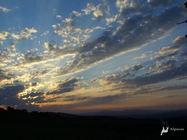 Allevamento_montabu_Alpacas_tramonto_di_primavera